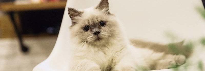 gatti appartamento