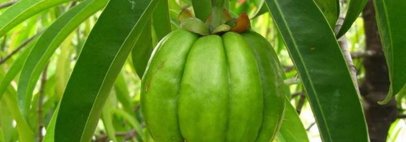 Garcinia Cambogia cosa serve_799x600